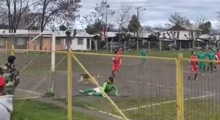 Cachorro goleador comemora golaço após desvio em cobrança de falta no Chile