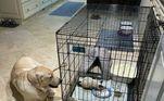Depois disso, os dois cães de Benken foram conhecer a nova moradora da casa, Os animais ficaram de olho em Betty durante todo o tempo em que ela estava na casinha