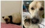 A gatinha Betty e o cachorro Truvy provam que aquela teoria de 'inimigos mortais