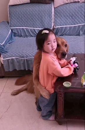 Ao presenciar a situação, o cachorro correu ao lado da menina para defendê-la