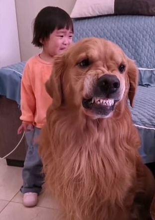 E chega até a rosnar mostrando os dentes