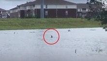 Golfinho é visto nadando em cidade após passagem do furacão Ida