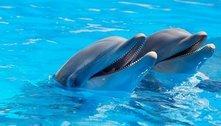 Golfinhos têm traços de personalidade semelhantes aos humanos