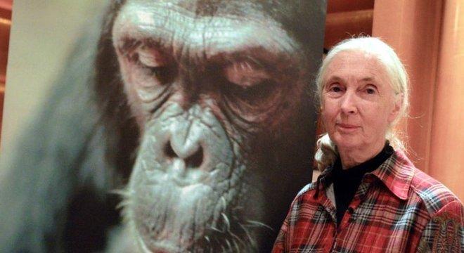 Goodall conseguiu resgatar centenas de chimpanzés usados na pesquisa médica