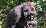 O recém-nascido, que ainda não tem nome, é visto olhando para a mãe com amor e também tentando arrancar alguns lanches dela