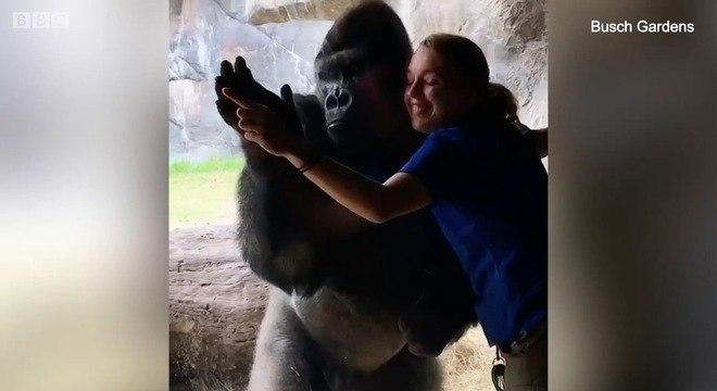 O primata tem 12 anos e fica no parque Busch Gardens, na Flórida, nos Estados Unidos