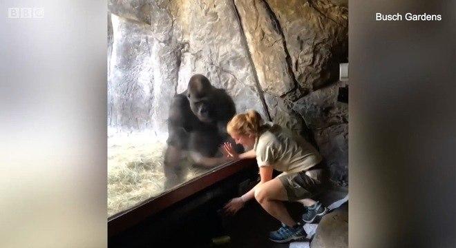 Os dois trabalham juntos há três anos em exercícios para melhorar o bem-estar do animal