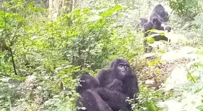 Uganda tem uma enorme parte de animais selvagens em suas florestas