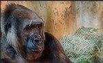 O animal ainda não tem sexo definido e é o quinto animal da espécie nascido na capital mineira