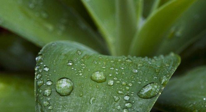Há algo químico na fragrância agradável que sentimos de ar limpo e terra molhada, após a chuva
