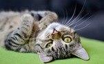 Segundo a dona da conta, Jagger é um dos cinco gatos dela e o único que