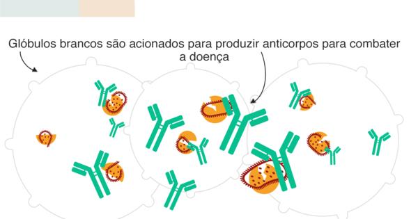 As lições da vacina que chegou de 'braço em braço' ao Brasil em 1804 – HORA 7