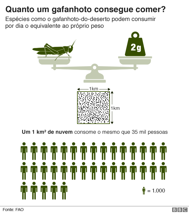 gráfico sobre capacidade de consumo de uma nuvem de gafanhotos