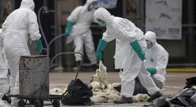 Em 2016, China teve grande surto da gripe aviária