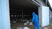Rússia diz ter detectado primeiro caso da gripe aviária em humanos