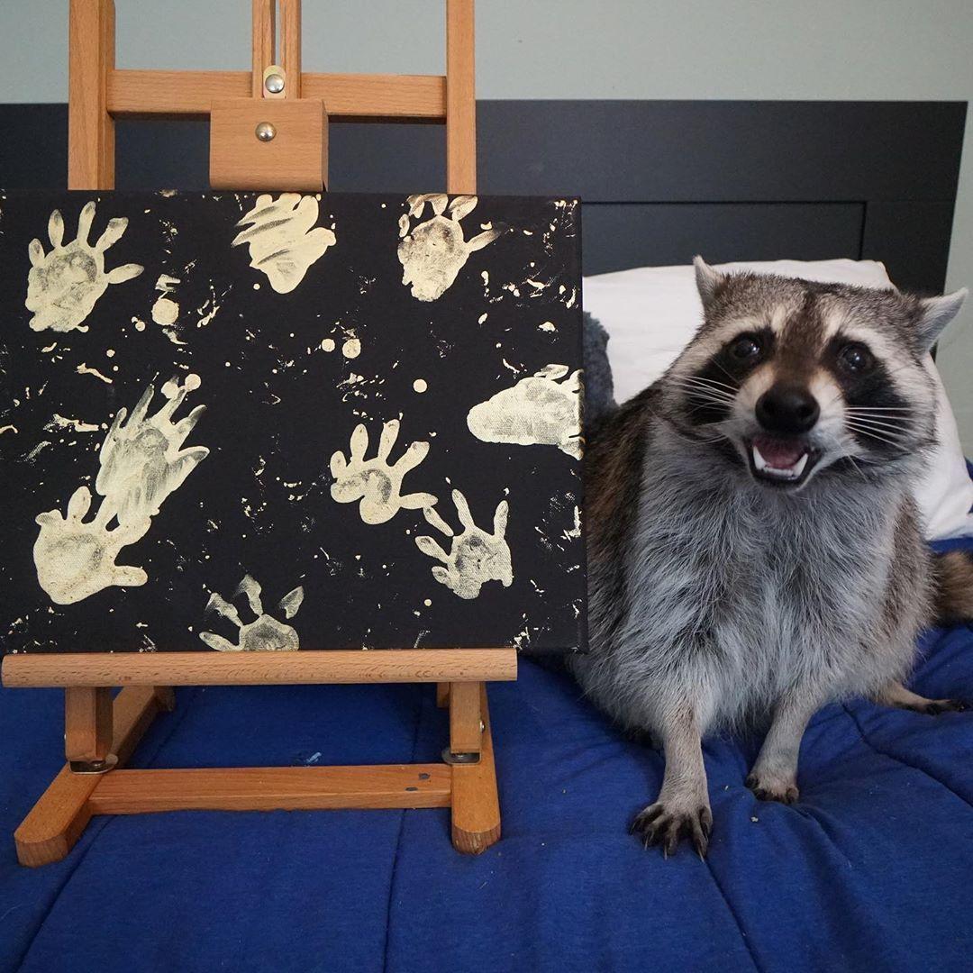 Guaxinins adotados viram artistas e lucram até R$ 800 por quadro ...