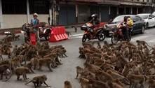 Guerra entre gangues de macacos para o trânsito na Tailândia