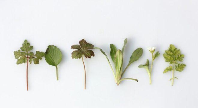 Guia da Cozinha - Aprenda como usar ervas frescas na cozinha