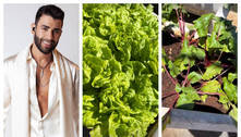 Gusttavo Lima mostra horta da enorme fazenda que vive em Goiás
