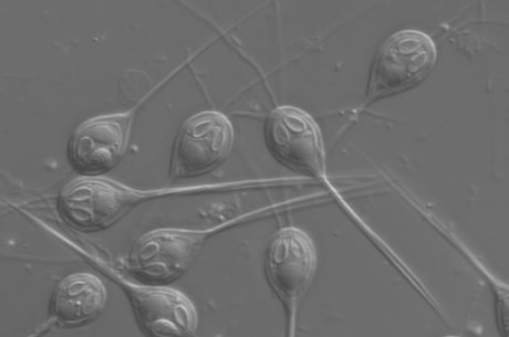 Imagem monocromática dos parasitas