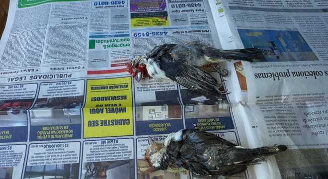 Alguns animais mortos também foram encontrados no local