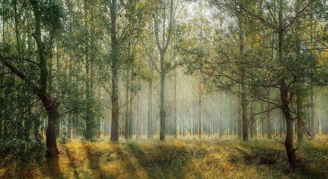 Preservação de árvores trará muitos benefícios para o país