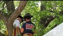 Bombeiros resgatam homem que subiu em árvore para resgatar gato