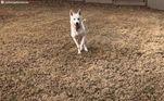 Mesmo depois de passar pormaus-tratos, o cão se revelou um companheiro muito amoroso e gentil, que adora brincar e correr pelo quintal