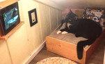 Se os gatos já são criaturas mimadas e espaçosas por natureza, imagine quando ganham um quarto só para eles, com direito a TV e tudo. Foi o que aconteceu Wyatt, nos Estados UnidosVeja também: Gato protege criança que tenta se pendurar no parapeito da varanda