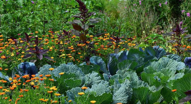 Brota criou a primeira horta inteligente do país