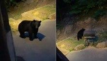 Hóspede deixa cabana, acena para ursa e quase é atacado pelo bicho