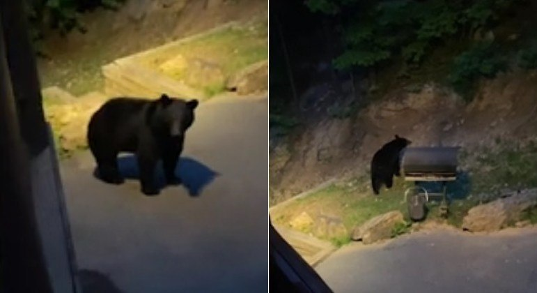 Hóspede saiu de cabana, cumprimentou urso e quase foi atacado pelo bicho