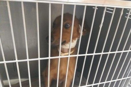 Cães e gatos chegam feridos e desidratados ao hospital