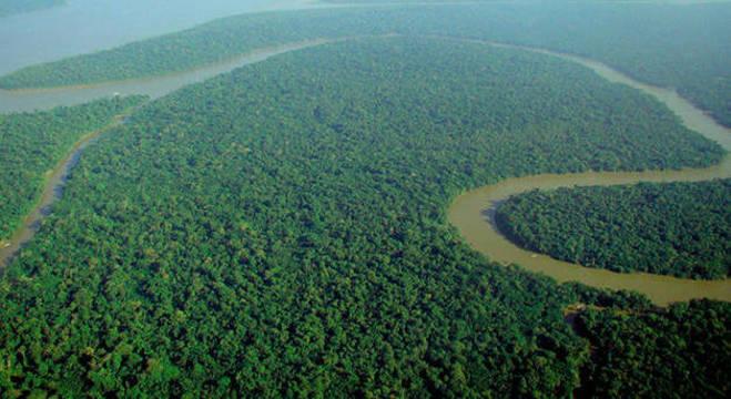 Faça um tour online pela floresta amazônica