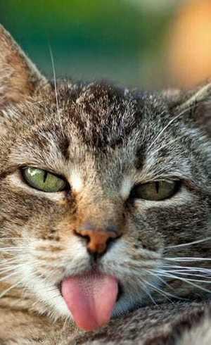 Gatos sabem que são chamados