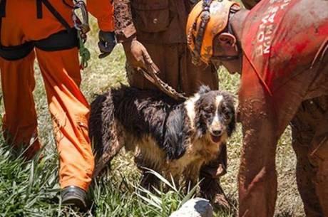 Cãozinho Thor ajudou nas buscas por vítimas