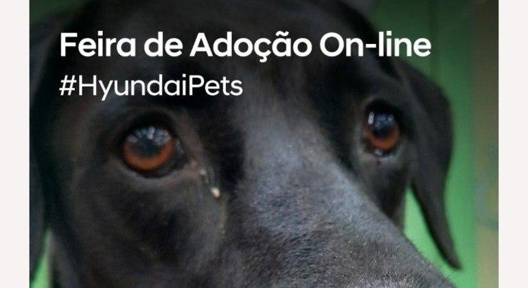 Nas redes sociais a Hyundai promove campanhas de adoção consciente engajando o público pela internet