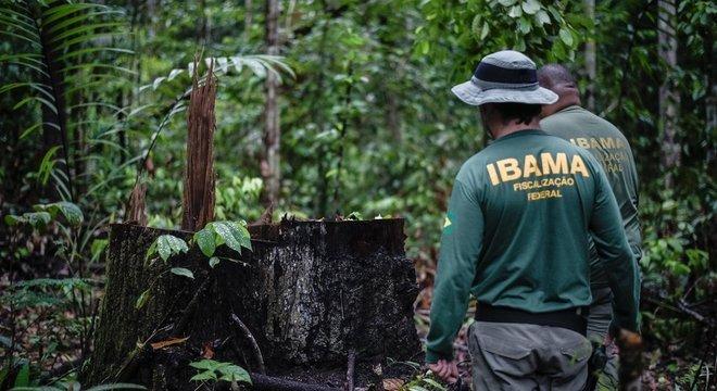 Maioria dos processos do Ibama está relacionados a danos à flora