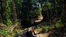 Ibama paralisa autorização de retirada de madeira do PA e MT
