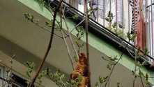 Mulher fica apavorada com iguana em árvore, mas era croissant