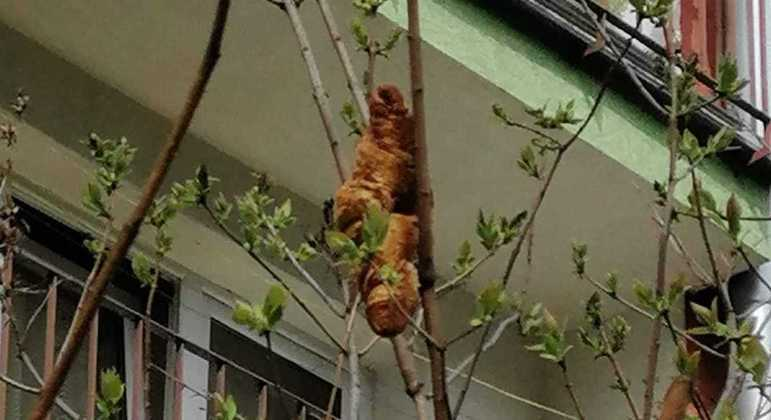 Polonesa ficou aterrorizada com suposta iguana em uma árvore, mas era um croissant