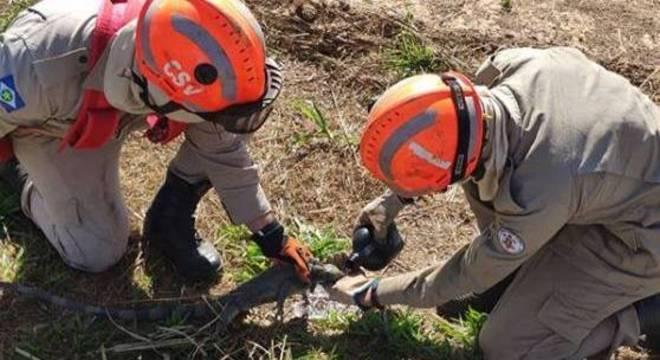 Bombeiros ajudam iguana a beber água antes de fazer a soltura em local seguro