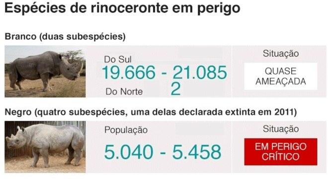 Ilustração da BBC News mostra qual é a situação de cada espécie de rinoceronte; a subespécie de rinoceronte branco do norte só tem mais duas fêmeas, enquanto a do norte tem ma