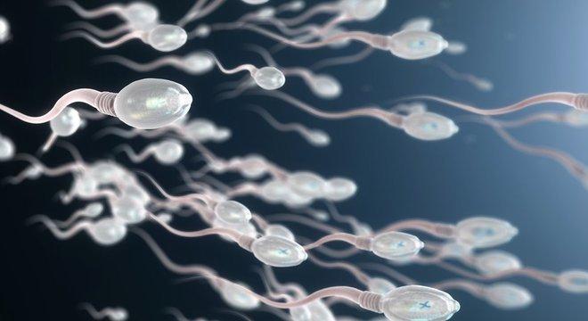 O líquido da próstata ajuda a transportar os espermatozóides