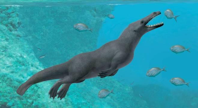 O fóssil encontrado no Peru é o único de uma baleia quadrúpede descoberta na América do Sul até o momento