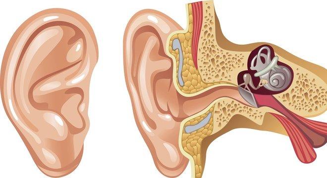 Danos nos pequenos e delicados pelos do ouvido interno podem mandar sinais que nosso cérebro interpreta como sons