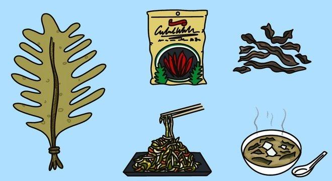 As algas wakame podem ser cultivadas durante todo o ano