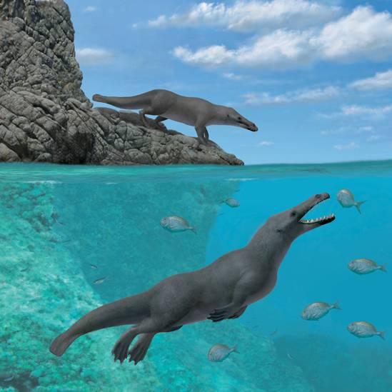 O fóssil do Peru indica que as baleias de quatro patas cruzaram o Atlântico Sul, da África à América do Sul
