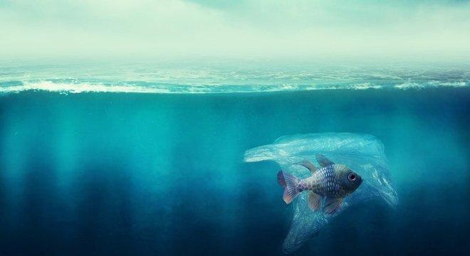 Enquanto o impacto do plástico em animais marinhos adultos é cada vez mais conhecido, autores de novo estudo encontraram a contaminação em larvas de peixes