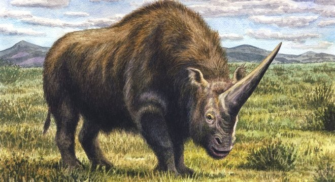 o unicórnio da sibéria animal pré histórico que conviveu com
